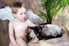 Little Angel with Lamb. Little Angel boy holding baby Lamb stock images