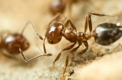 Little ant in nature. super macro Royalty Free Stock Image