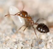Little ant in nature. super macro Stock Photo
