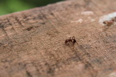 The little ant. See the little ant. Imagine if thats you. He was alone for food Royalty Free Stock Image