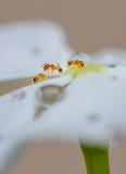 Little Ants Stock Photo