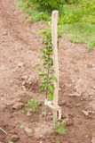 A little apple-tree grows Stock Photo