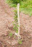 A little apple-tree grows Stock Photo