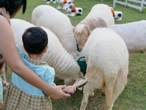 Little Asian baby is afraid of sheep, while about to brush its hair for the first time royalty free stock image