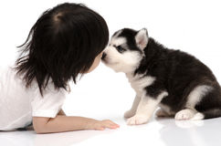 Little asian baby kissing Siberian husky puppy. On white background isolated stock images