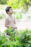 Little Asian boy watering the tree Royalty Free Stock Photography