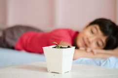 Little asian boy wating for new baby plant grow up Stock Image
