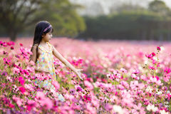 Little asian girl in flower fields Royalty Free Stock Photography