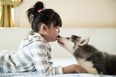 Little asian girl kissing a siberian husky puppy Royalty Free Stock Image