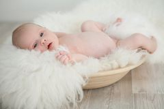 Little baby in a basket Stock Image
