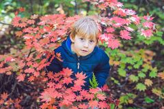 Little baby boy in the autumn park.  Stock Images