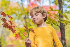 Little baby boy in the autumn park.  Royalty Free Stock Photo