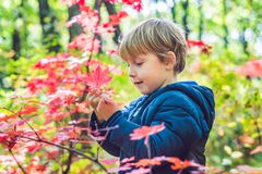 Little baby boy in the autumn park Stock Photography
