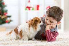Little baby boy with dog lying on the floor at christmas tree Stock Images