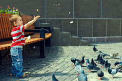 Little baby boy feeding birds in town square. Sunny day Royalty Free Stock Photography