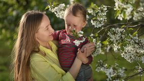 Little baby boy with her mother in blossom garden stock video