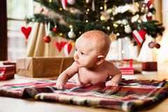 Little baby boy lying under Christmas tree on checked blanket. Cute little baby boy under Christmas tree lying on checked blanket royalty free stock photo