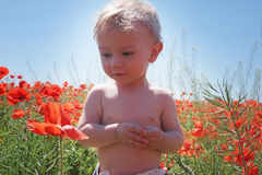 Little baby boy posing on poppy fields. Little baby boy posing on wild poppy fields royalty free stock image