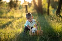 Little baby boy puts a cute puppy in a wicker basket at sunset in the forest. The concept of friendship, happiness, joy and. Childhood stock photos