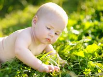 Little baby boy at summer Royalty Free Stock Photo