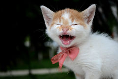 Little baby cat Royalty Free Stock Images