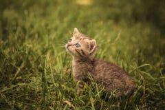 Little baby cat looking very sad Stock Photo