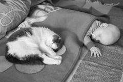 Baby and cat sleep together in the bed, black and white photo royalty free stock photos
