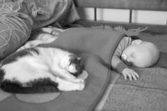 Baby and cat sleep together in the bed, black and white photo royalty free stock images