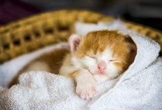 Little baby cat Stock Image