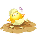 Little baby chicken from an egg Royalty Free Stock Photography