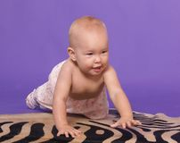 Little baby girl crawl on all fours. Little baby girl on artificial zebra skin at the studio crawl on all fours on the floor Royalty Free Stock Photography