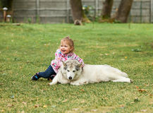 The little baby girl playing with dog against green grass Stock Photos