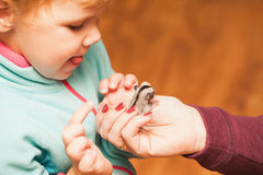 Little baby girl playing with Sugar glider cub Royalty Free Stock Photos