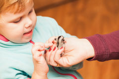 Little baby girl plays with Sugar glider cub Stock Photo