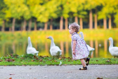 Little baby girl at river shore chasing wild geese Stock Photos