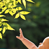 Little baby hand and fresh green leaves. In spring Stock Images