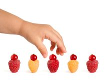 Little Baby Hand Taking Tasty Berries from the Row of Ripe Colorful Raspberries with Red Currants on the Top. On the White Background. Cute Summer Berry Cakes Stock Images