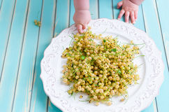 Little baby hands with white currant over wooden turquoise table Stock Photography