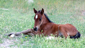 Little baby horse Royalty Free Stock Images
