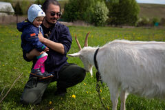 Little baby with middle age father near goat Royalty Free Stock Photo