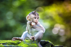 Little baby-monkey Stock Images