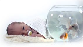 Little baby observing the fishes in the fish tank stock footage