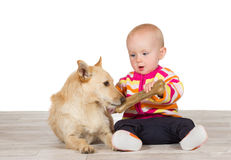 Little baby offering the dog a bone Stock Image
