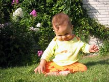Little Baby Playing on the Grass. Little curious baby sitting and playing on the grass Stock Photo