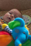 Little baby plays with elephant Royalty Free Stock Images