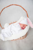 Little baby rabbit Stock Photos