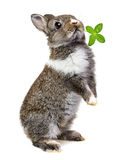 Little baby rabbit Royalty Free Stock Photos