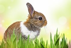 Little baby rabbit on a white background. A little baby rabbit on a white background stock photos