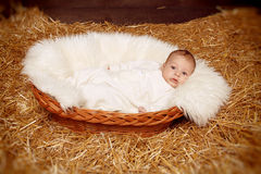 Little baby resting in basket on haystack  straw background Stock Image