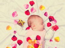 Little baby with rose petals Stock Photos